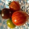 セレブトマト